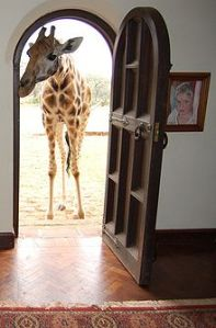 220px-Giraffe_at_the_front_door,_Giraffe_Manor,_Nairobi,_Kenya