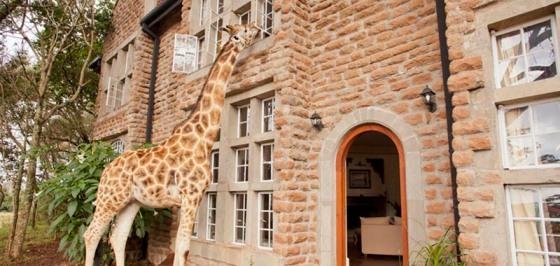 giraffe-manor-9