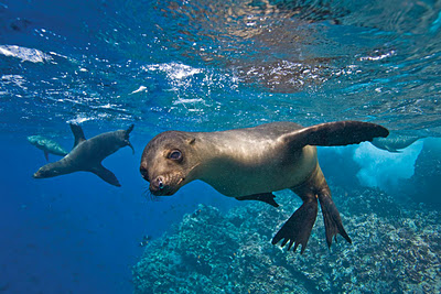 (Ecuador) – Galápagos Islands 1