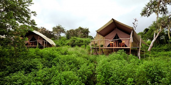 Safari Camp Tents
