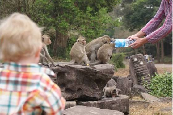 monkeys drinking water