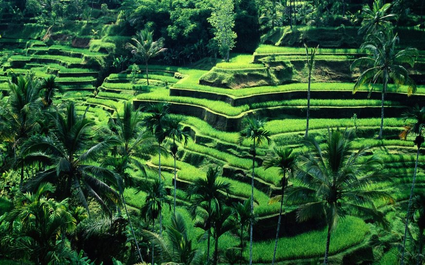 rice_terraces_bali