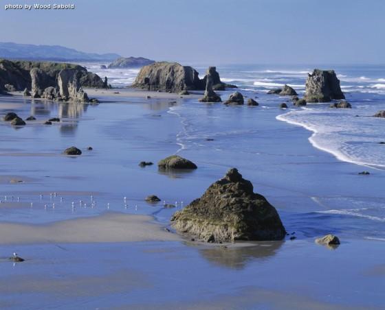 coast image by wood sabold