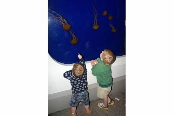 oregon coast aquarium jelly fish
