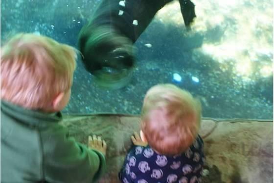 oregon coast aquarium sea otter