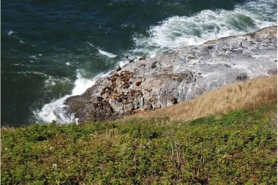 sea lion caves1