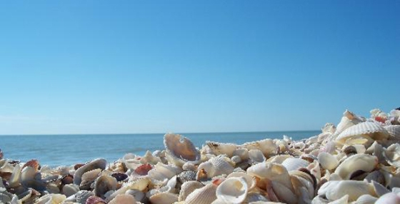 shells sanibel island_redandblack
