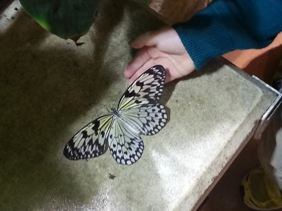 Academy of Natural Sciences_Butterfly