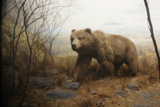Academy of Natural Sciences_Bear