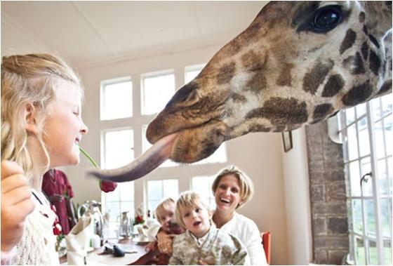 img_giraffe_manor_nairobi_5